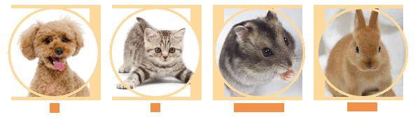 診察対象動物